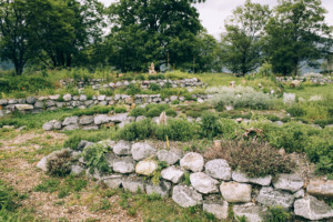 down to earth PERMACULTURE
