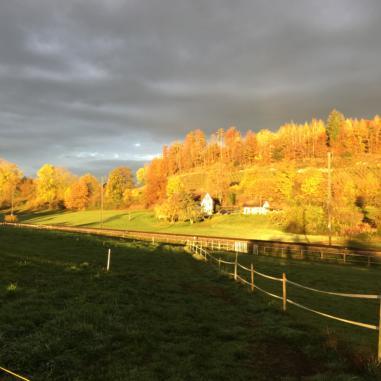 KURSE & AUSBILDUNGEN 2019 PERMAKULTUR AUENHOF bei FELDBACH
